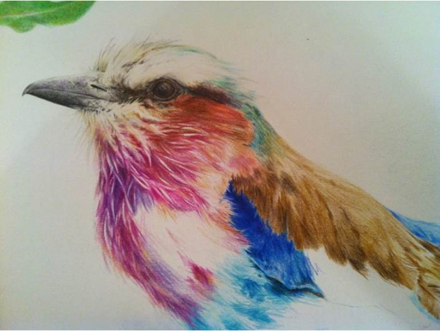 Lilac Roller - how many hours did I spend drawing that beak?
