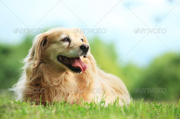 Stock image of dog